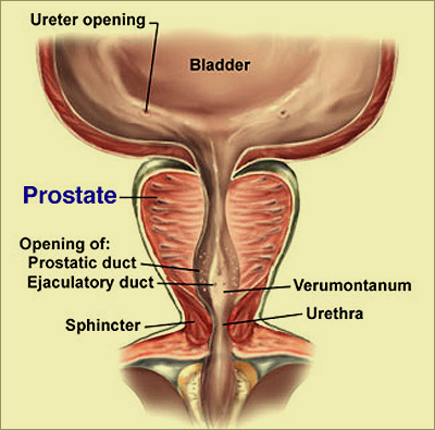 Dr amit ghose urologist kolkata india for robotic surgery prostate its diseases ccuart Image collections